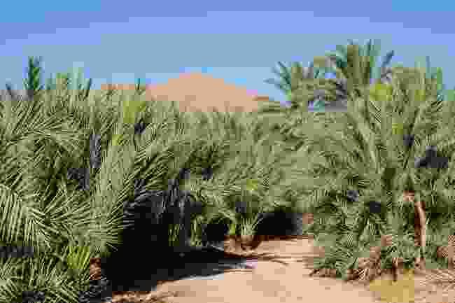 Garmeh oasis (Hamed Farhangi)