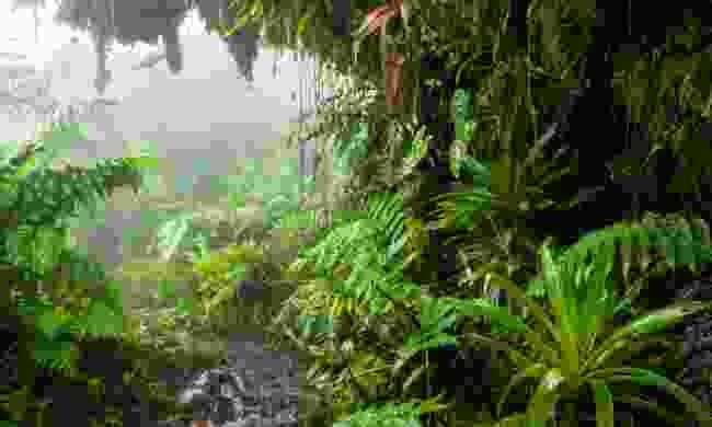 A path through the rainforest on Saba (Shutterstock)
