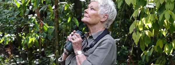 Judi Dench looks up to see Borneo's wonders (ITV)