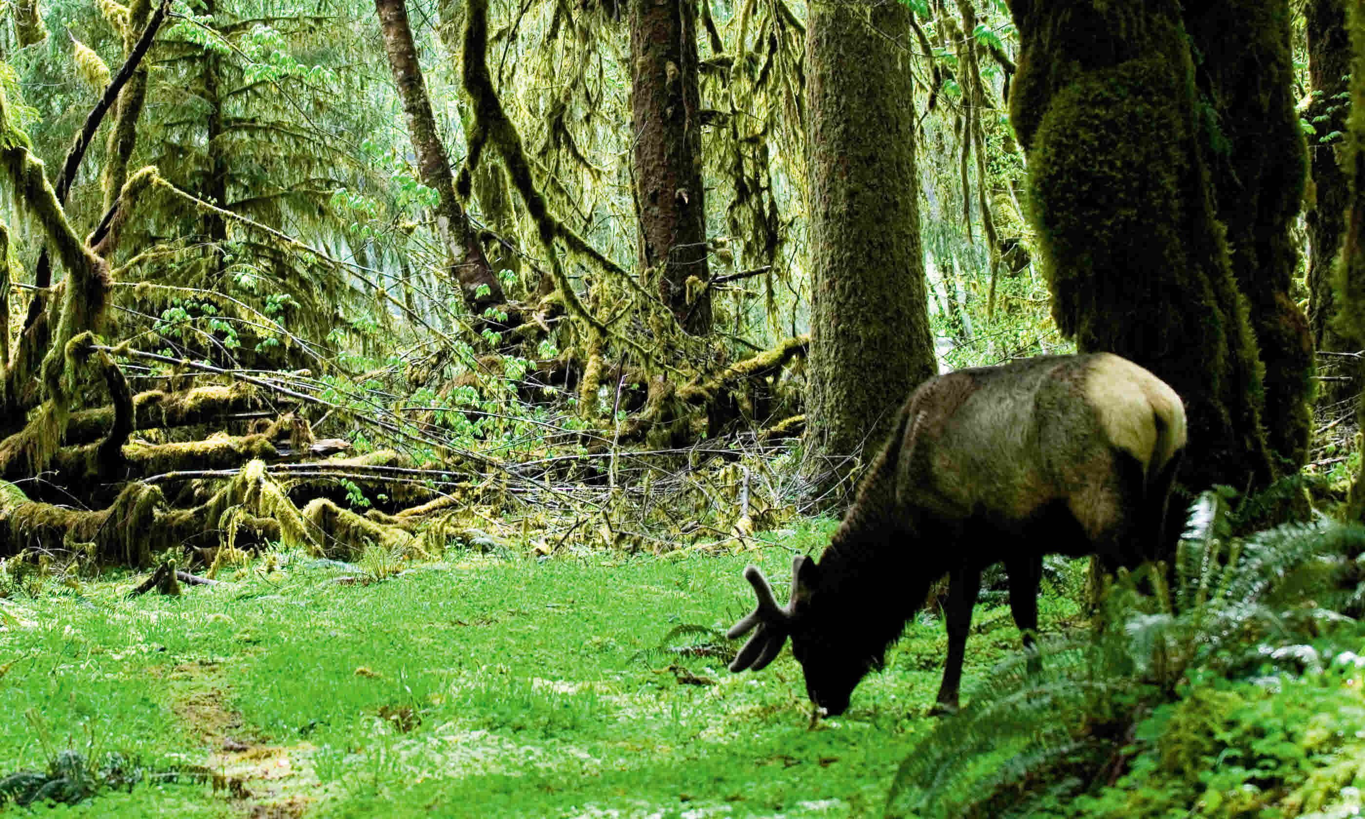 Where to see wildlife in the USA