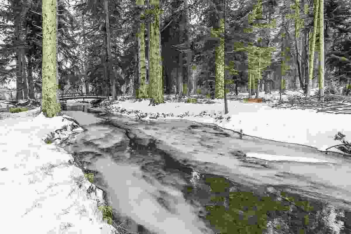Rhinefield Forest (Matthew Pinner)