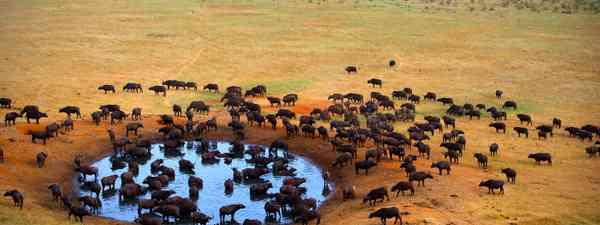 The Masai Mara Reserve in Kenya (Shutterstock)