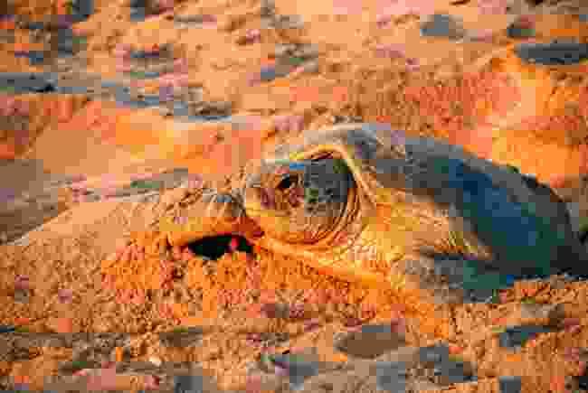 Green sea turtle in Oman (Shutterstock)