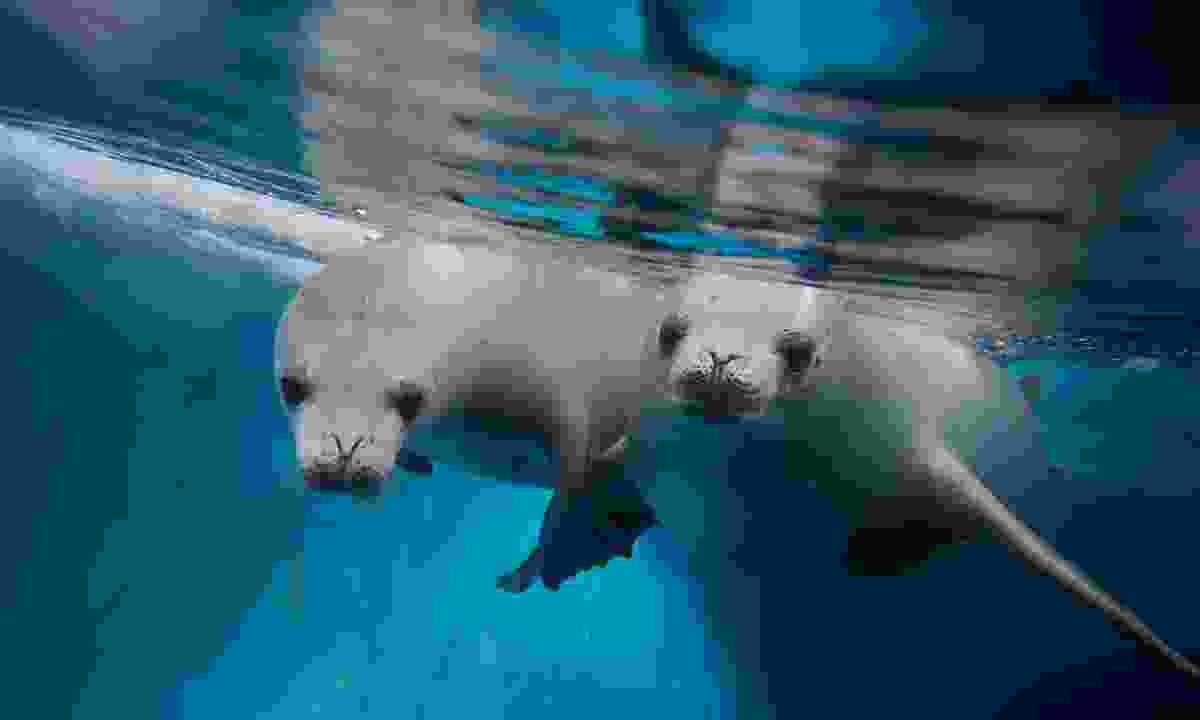 Crab eater seals. (Shutterstock)