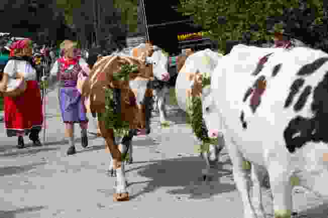 The Cow's Ball in Bohinj, Slovenia (Dreamstime)