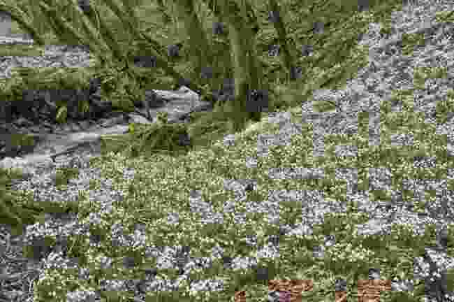 Snowdrop Valley, Exmoor (Dreamstime)