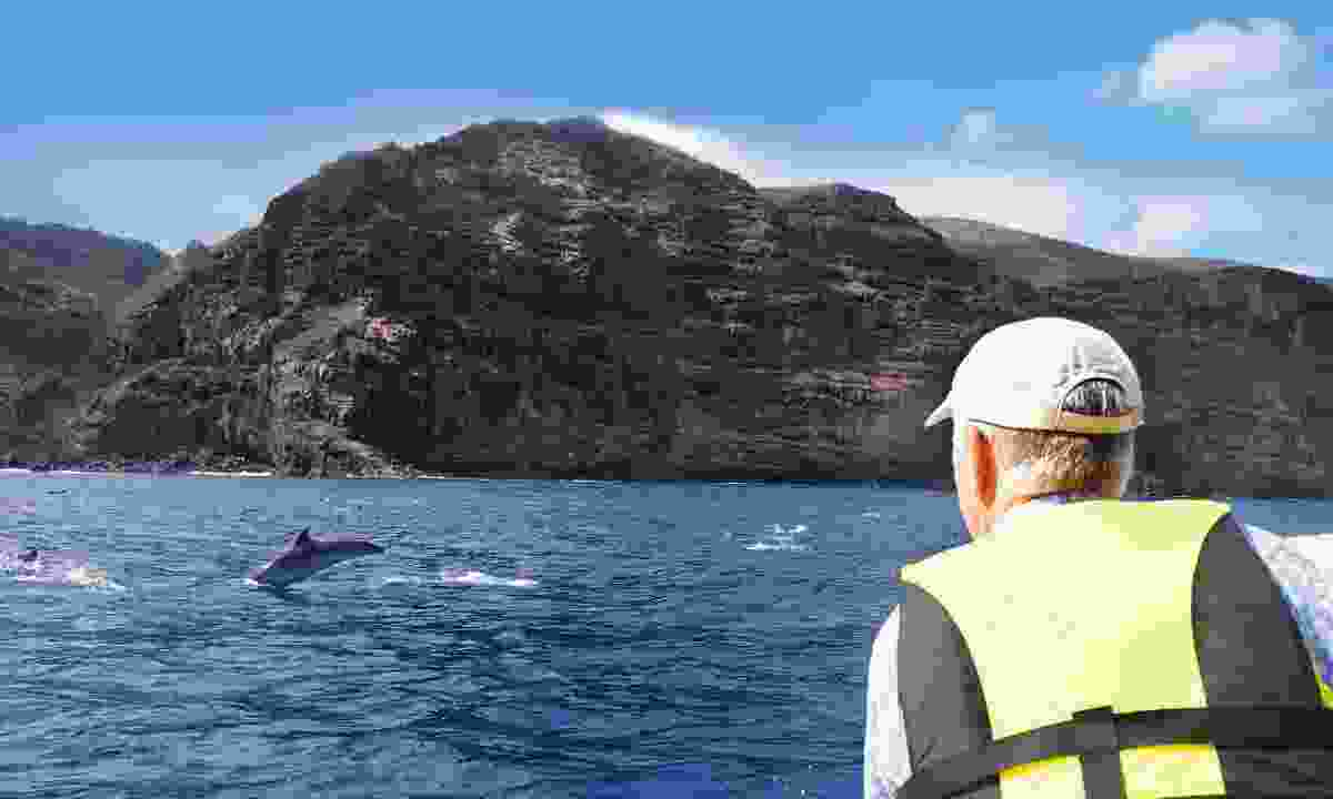 Dolphin watching off St Helena (Lyn Hughes)