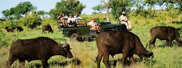 African safari (Dreamstime)