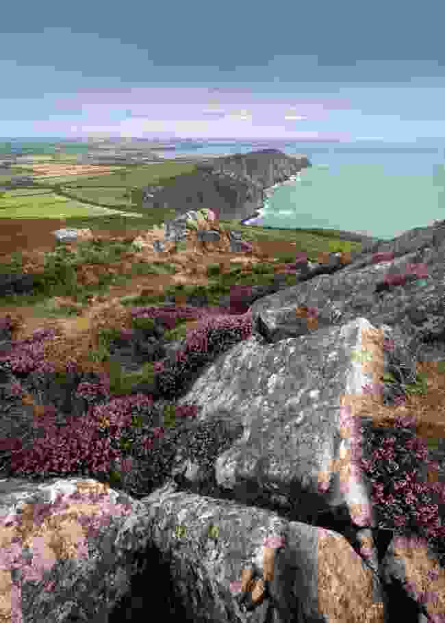 Heather-covered boulders, looking along the north Pembrokeshire coast (Drew Buckley)