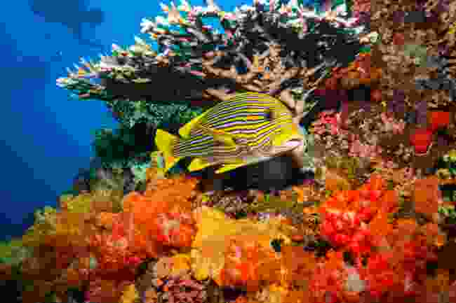Coral reefs of Komodo Island, Indonesia (Shutterstock)