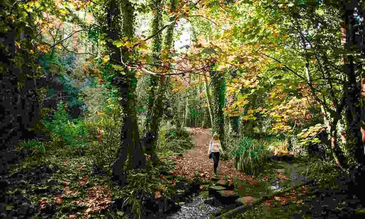 Try 'forest bathing' in Jersey (Visit Jersey)