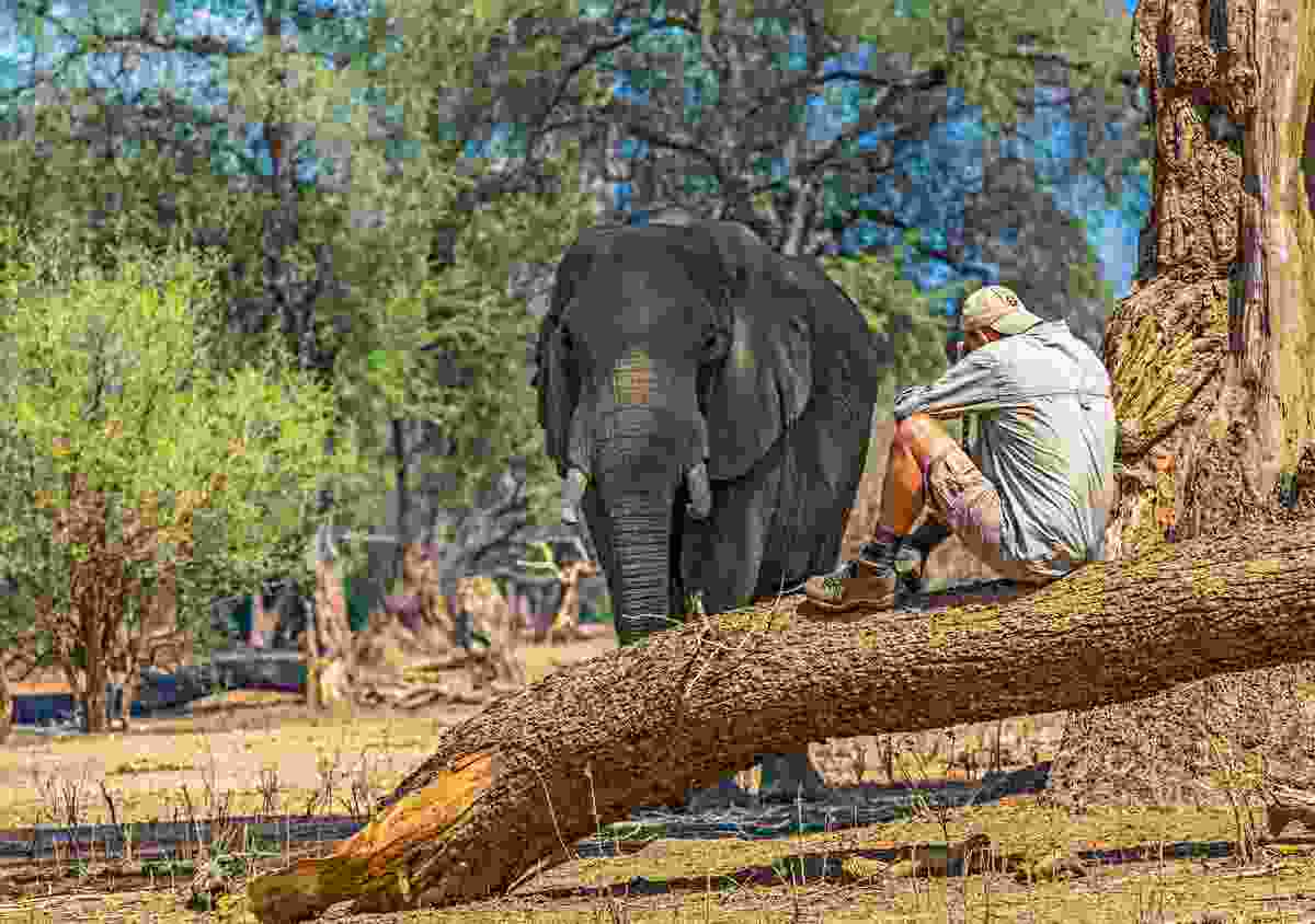 Walking Mana Pools means you get some close encounters, as Nick found (Will Whitford)