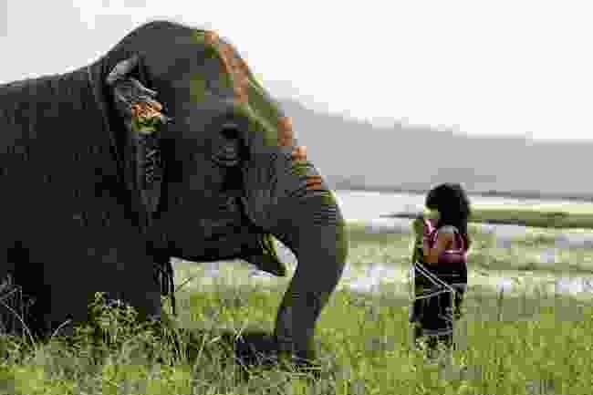 Girl from the Mnong ethnic group with an elephant in Vietnam (Rehahn)
