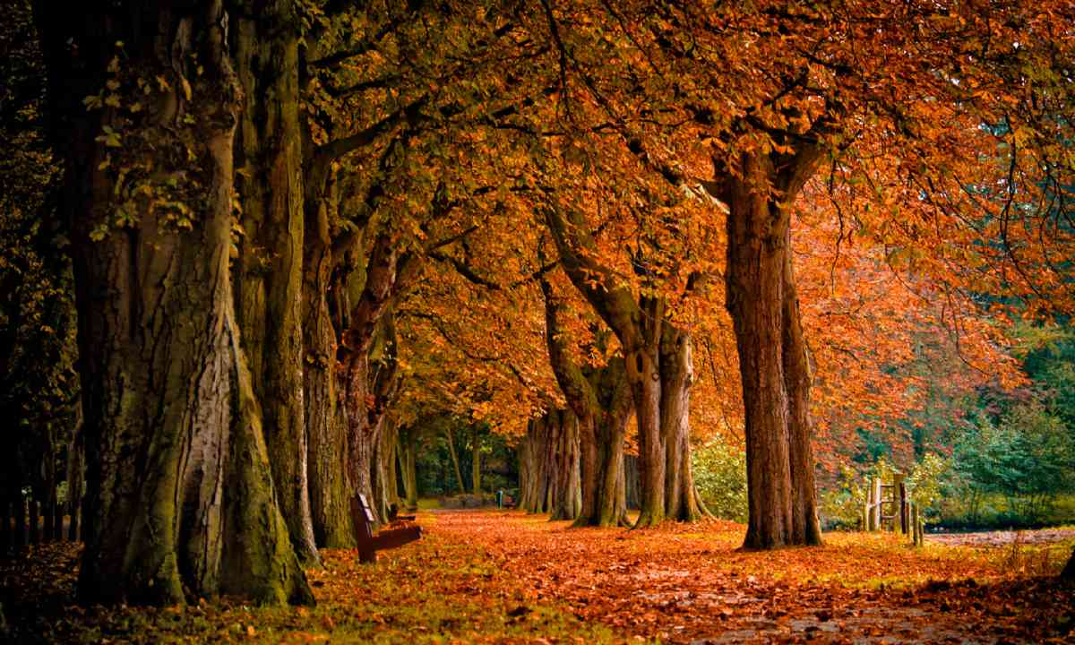 Autumn forest (Shutterstock)