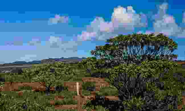 The beautiful Millennium Forest (St Helena Tourist Board)