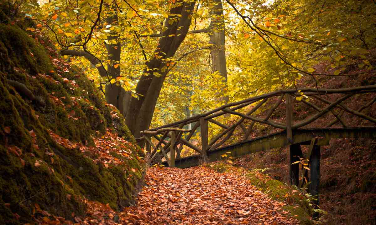 Forest bridge (Shutterstock)