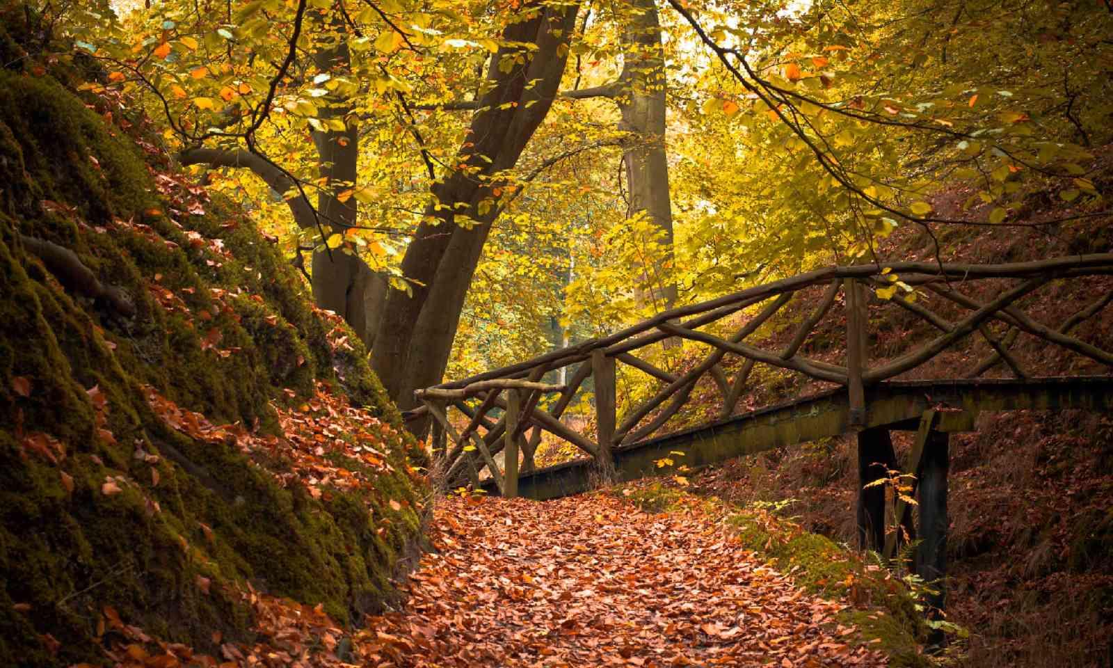 Forest bridge (Shutterstock)