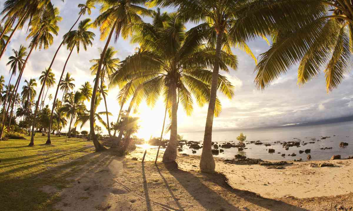 Palm trees at sunrise in Fiji (Dreamstime)