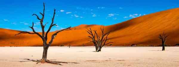 Namibia (Shutterstock)