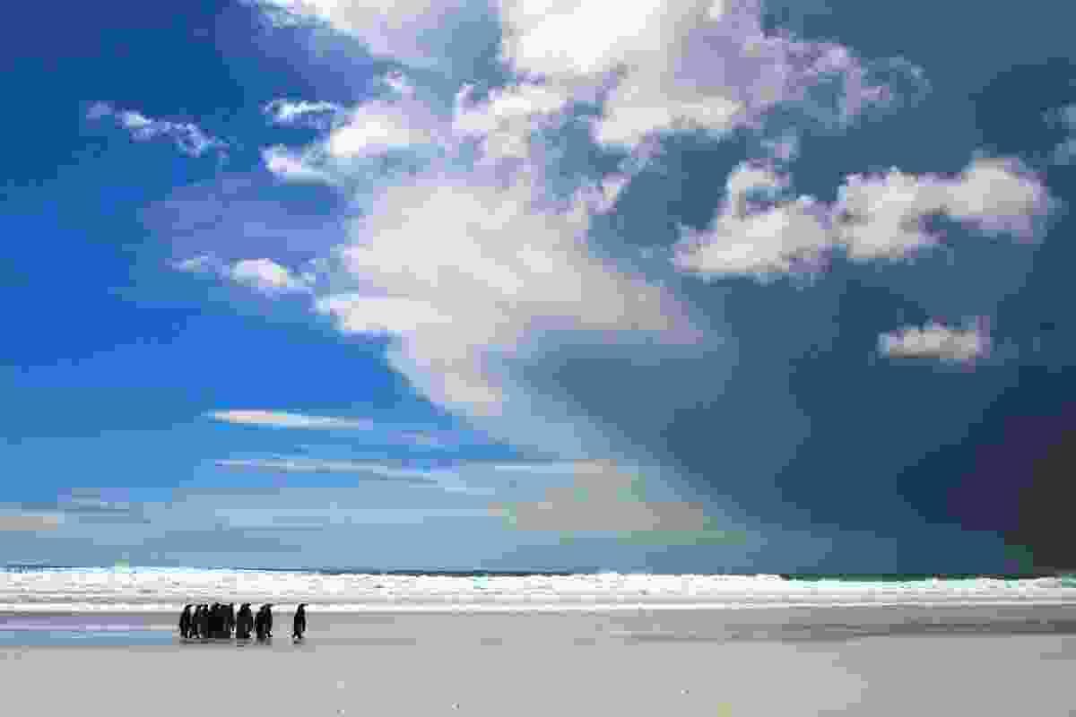 King penguins facing a storm at Volunteer Point, The Falklands (Graeme Green)