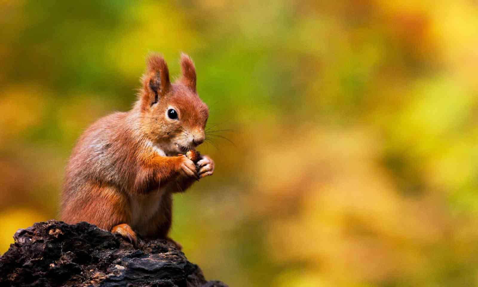 Squirrel (Shutterstock)