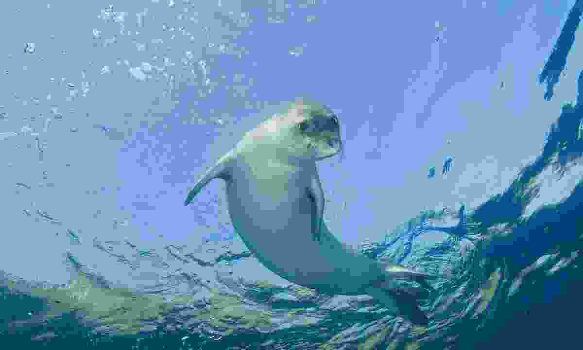 Dive with monk seals in Autumn