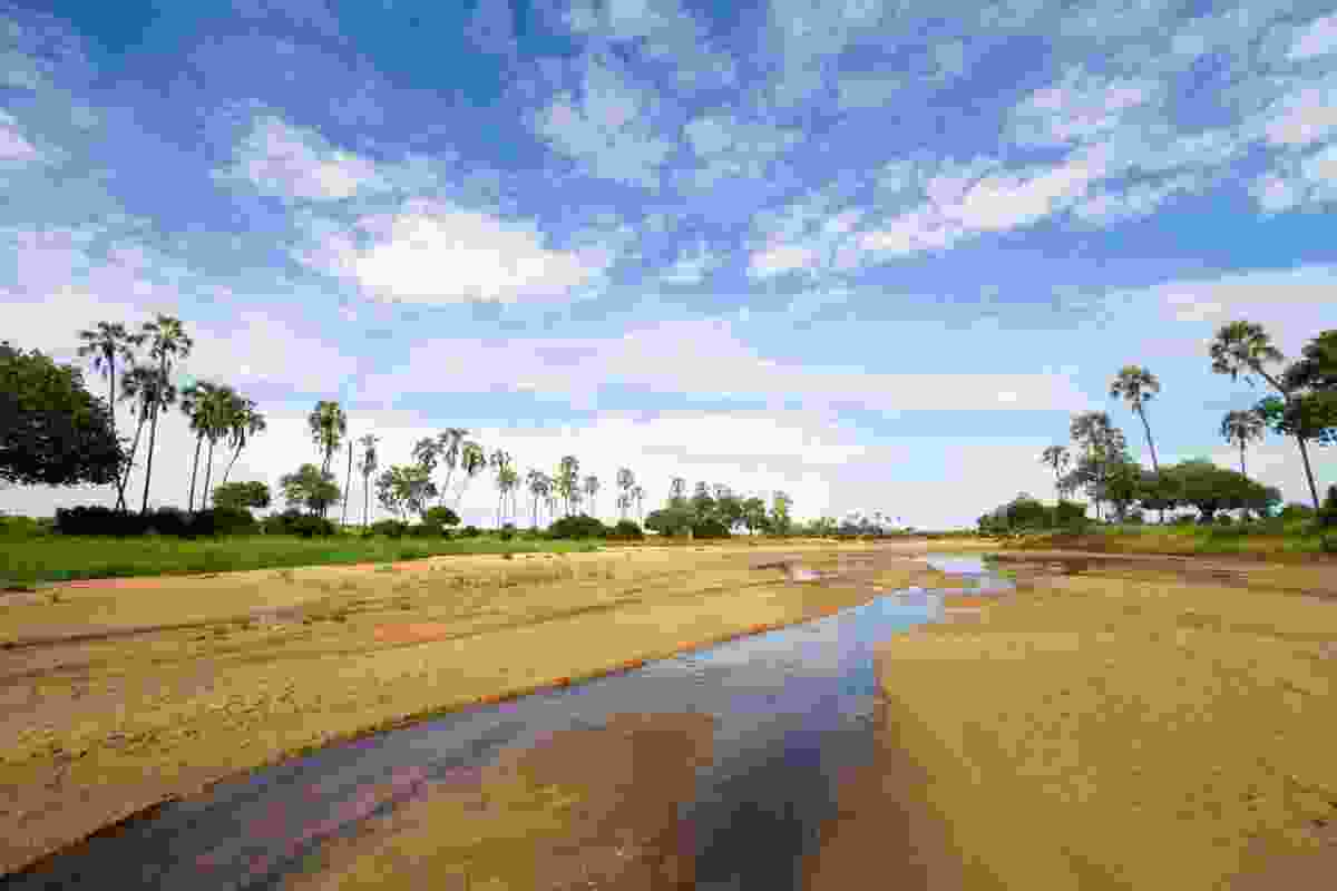 A scenic riverbed view of Ruaha National Park, Tanzania