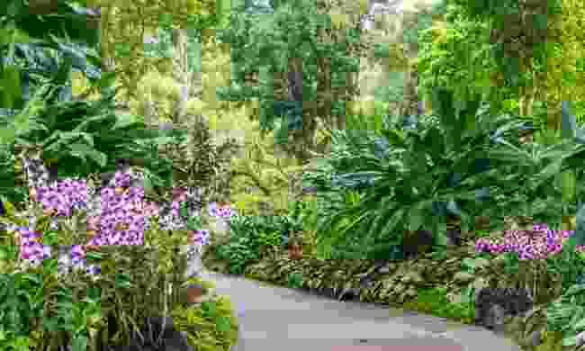 Singapore Botanic Gardens (Shutterstock