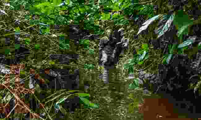 Wading through the Cuvette Centrale bog (Shutterstock)