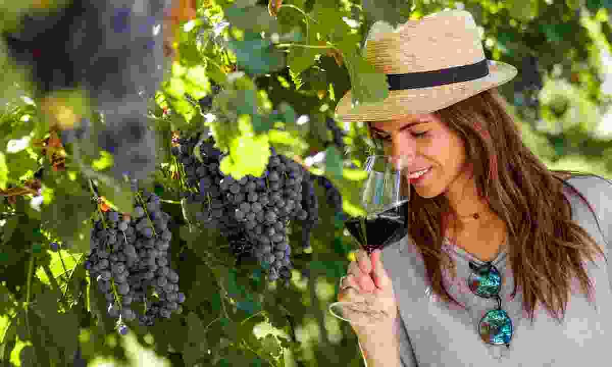 Visit a family-owned vineyard (Jacopo Salvi/ Garda Trentino S.P.A.)