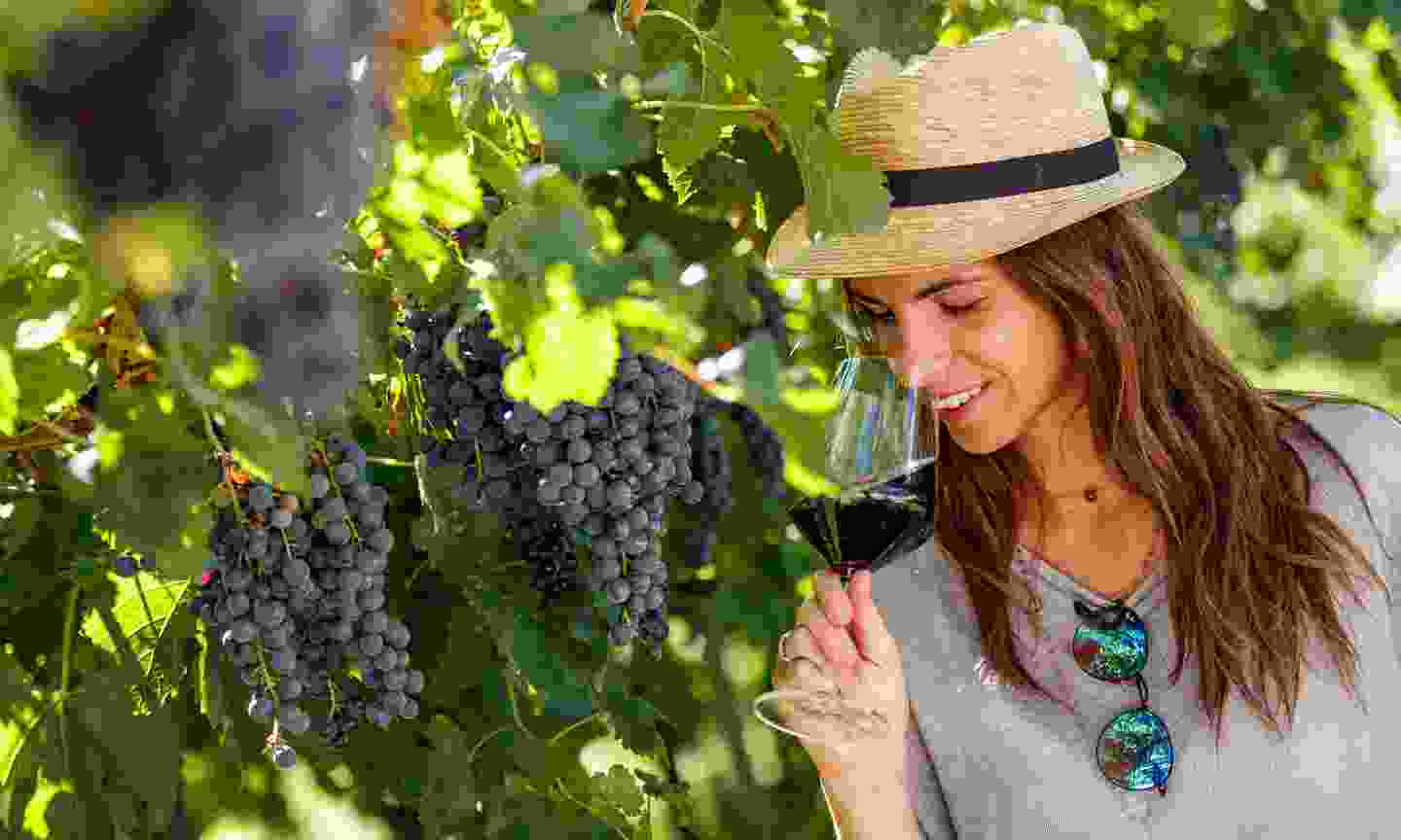 Visit a family-owned vineyard (Jacopo Salvi/ Garda Trentino S.P.A.)