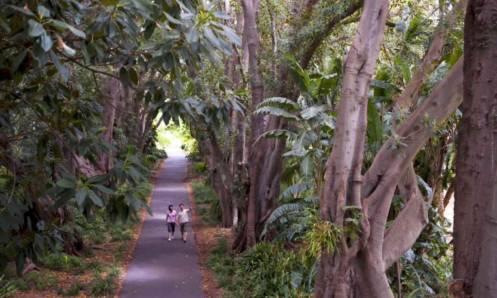 Adelaide Botanic Garden (SATC)