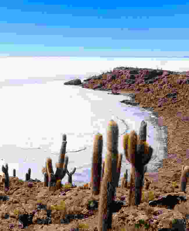 View of the salt flats from Incahuasi Island (Dreamstime)