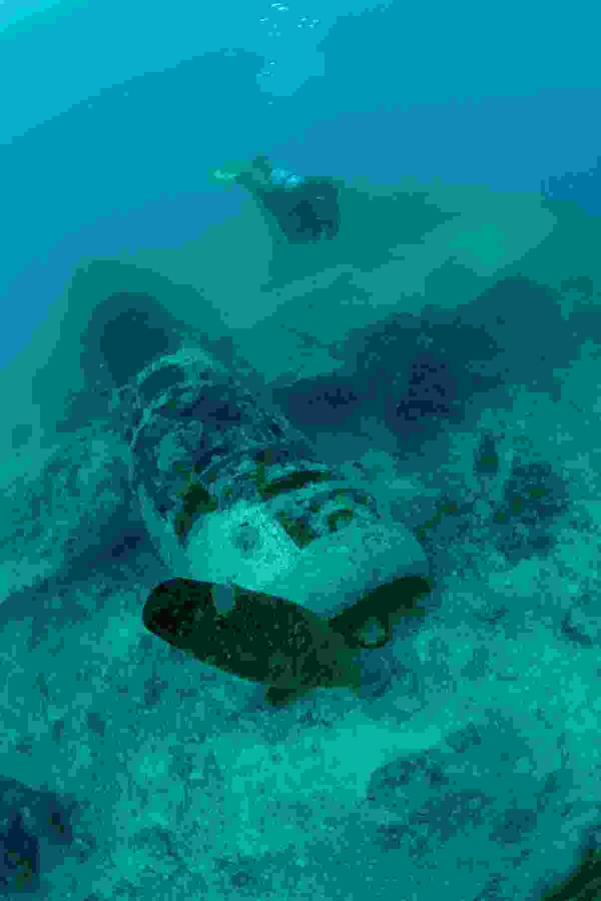 Diving among a plane wreck (PNGTPA)