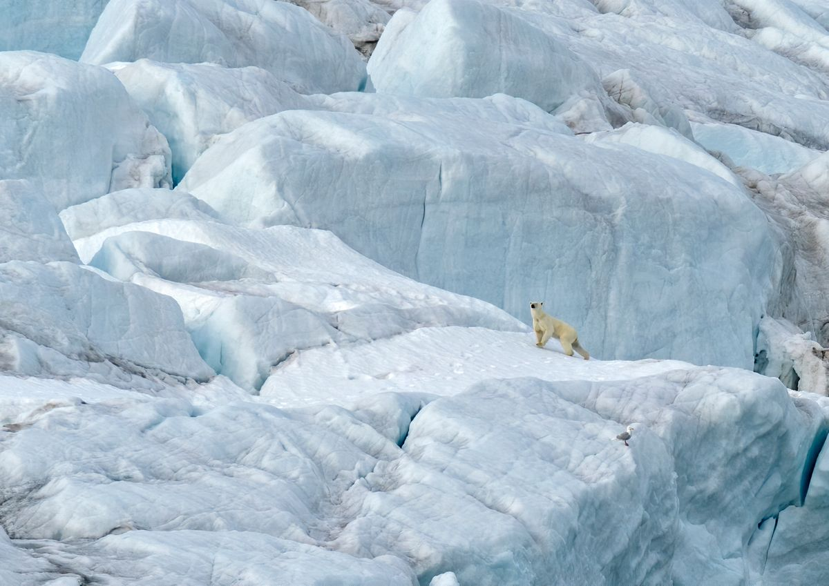Polar majesty Jackson Island, Franz Josef Land, Russia (Christopher Marsham)