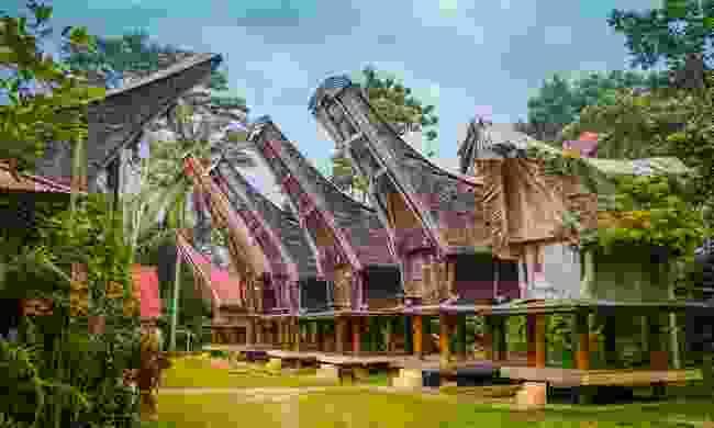 Tongkonans, large ancestral houses, in Sangalla, Toraja (Shutterstock)