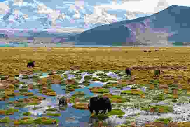 Karakul lake, Xinjiang Province, China (Dreamstime)