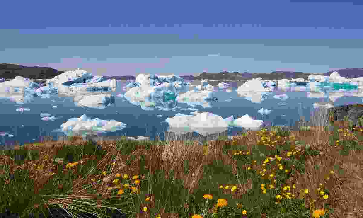Summer in Greenland (Dreamstime)