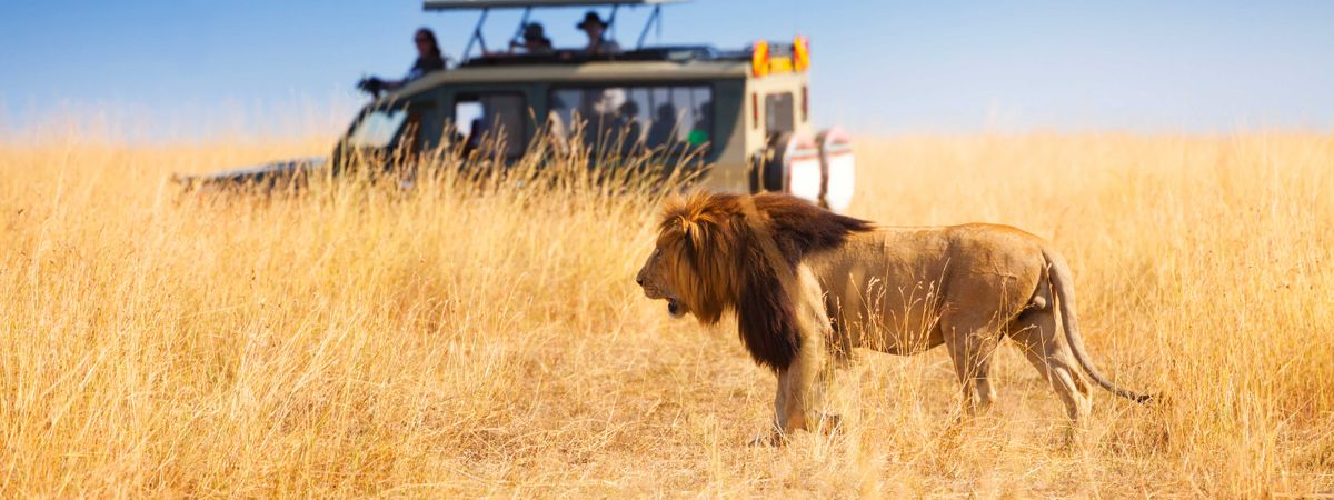 The best African safaris for any traveller
