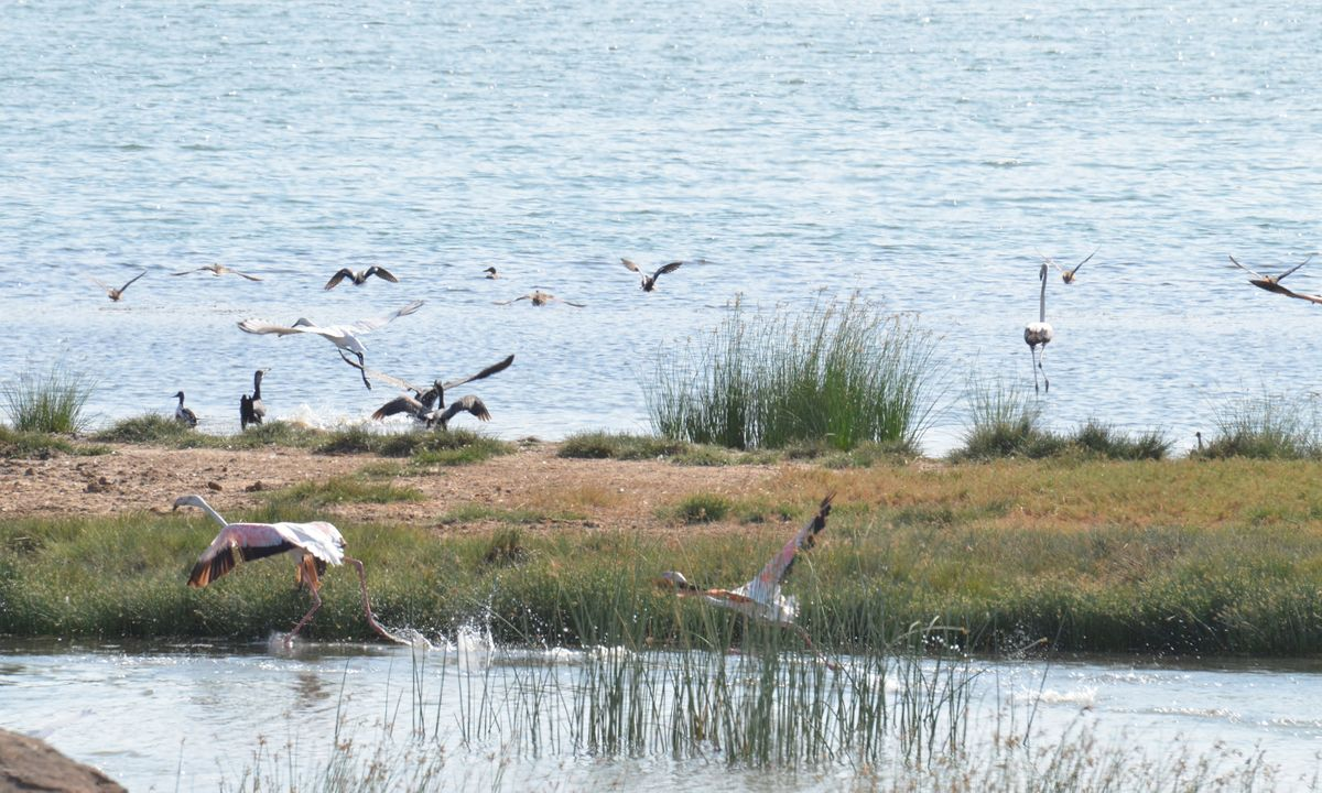 Flamingos, spoonbills and ibis are just some of the wetland birds that congregate at Khor Rori (Phoebe Smith)