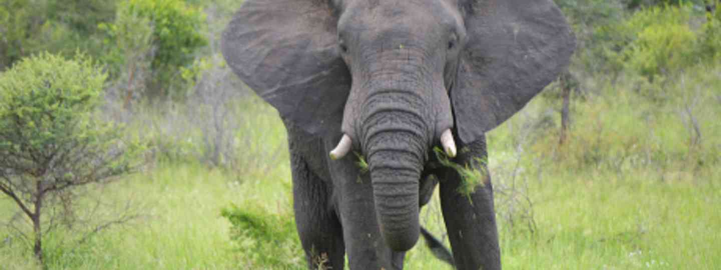 In the way of a charging elephant is not a safe place to be (Vaughan Leiberum)