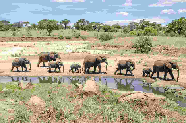 Elephants in Tarangire National Park, Tanzania (Shutterstock)