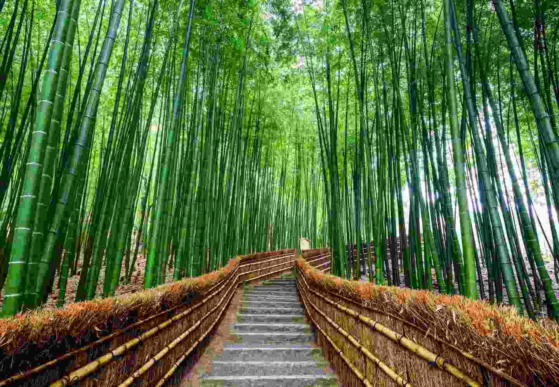Arashiyama Bamboo Grove, Kyoto (Shutterstock)