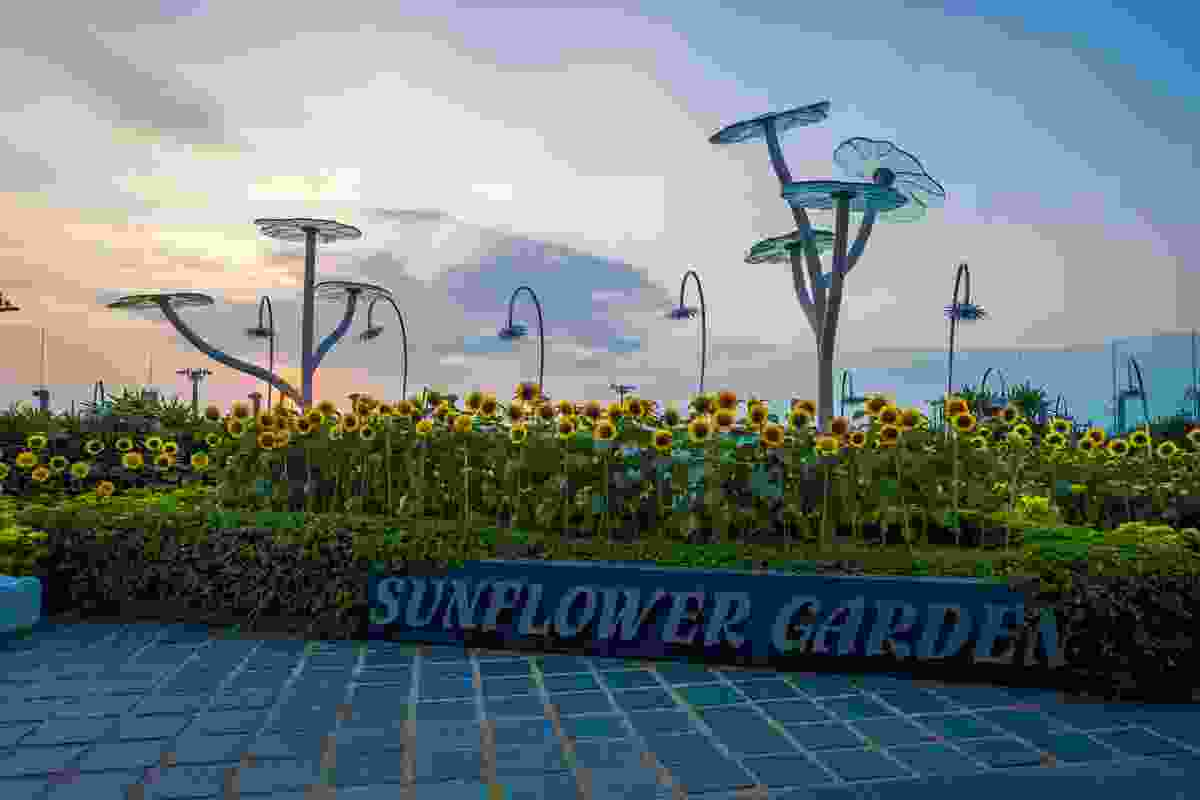 Terminal 2's sunflower garden, one of many nature attractions at Singapore's Changi Airport (Shutterstock)