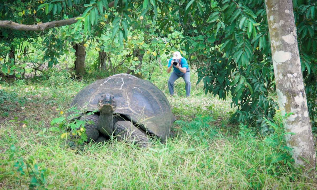 A tortoise on the loose in El Chato reserve  (Jade Stein)