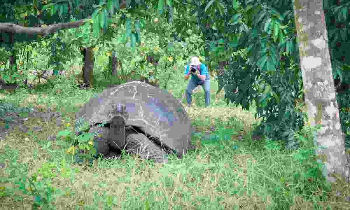 Una tortuga suelta en la reserva de El Chato (Jade Stein)