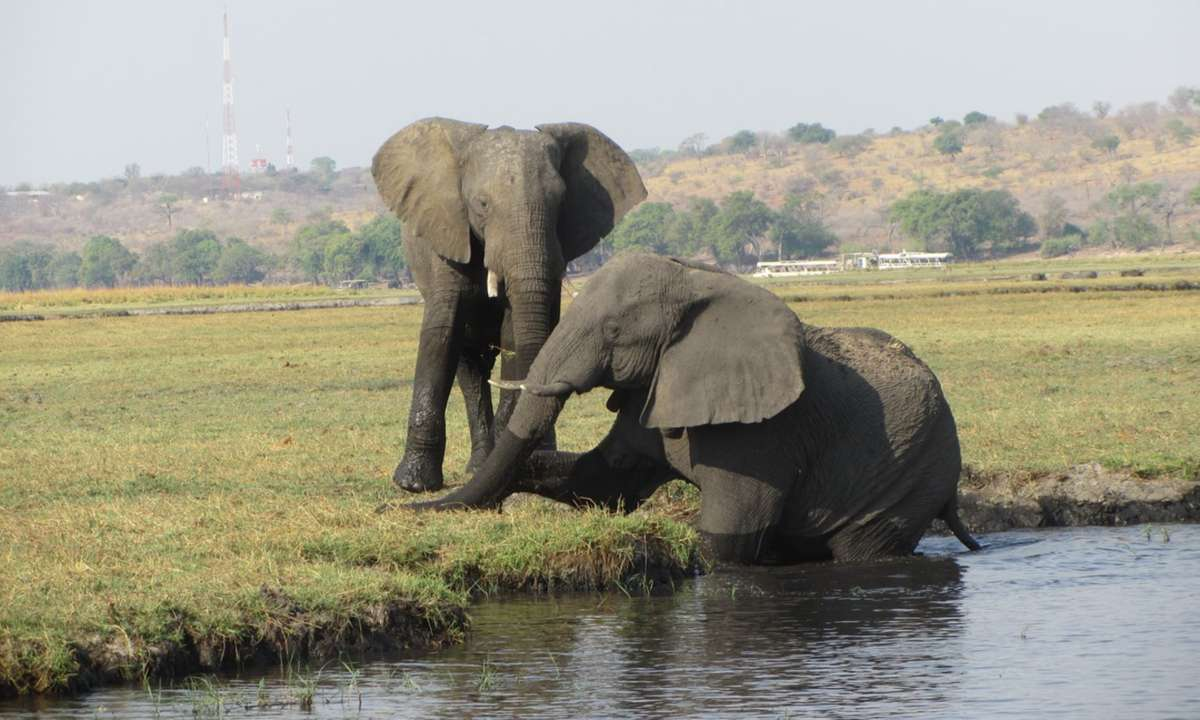 Elephants in Chobe National Park (Audley)