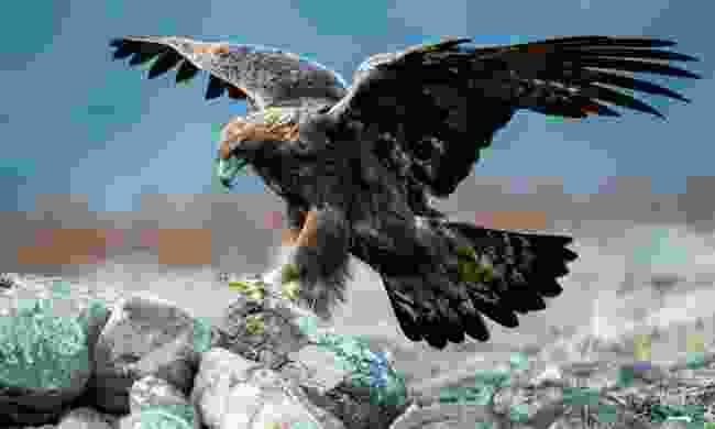 A Golden Eagle in the Rhodope Mountains