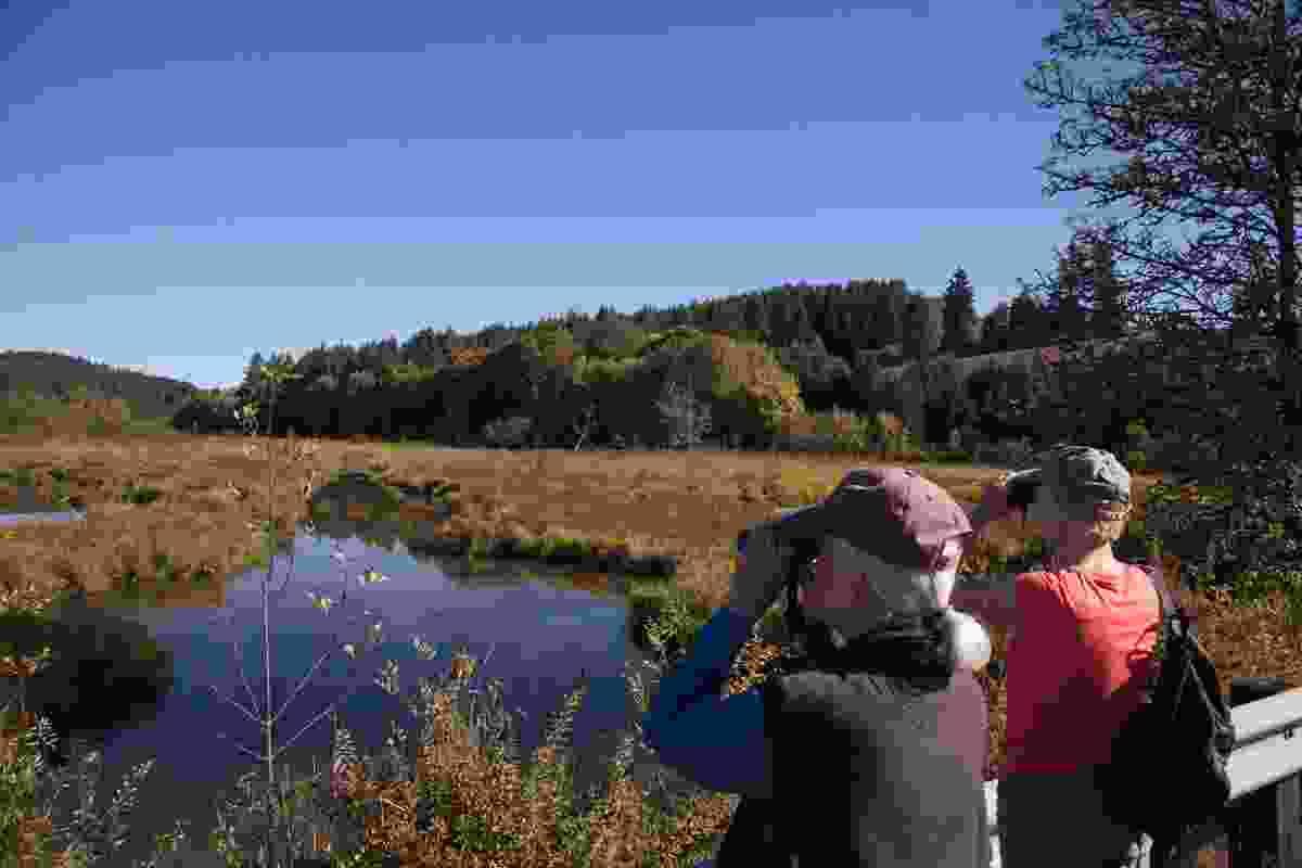 Go birdwatching at Killin Wetlands (Jim Shea)