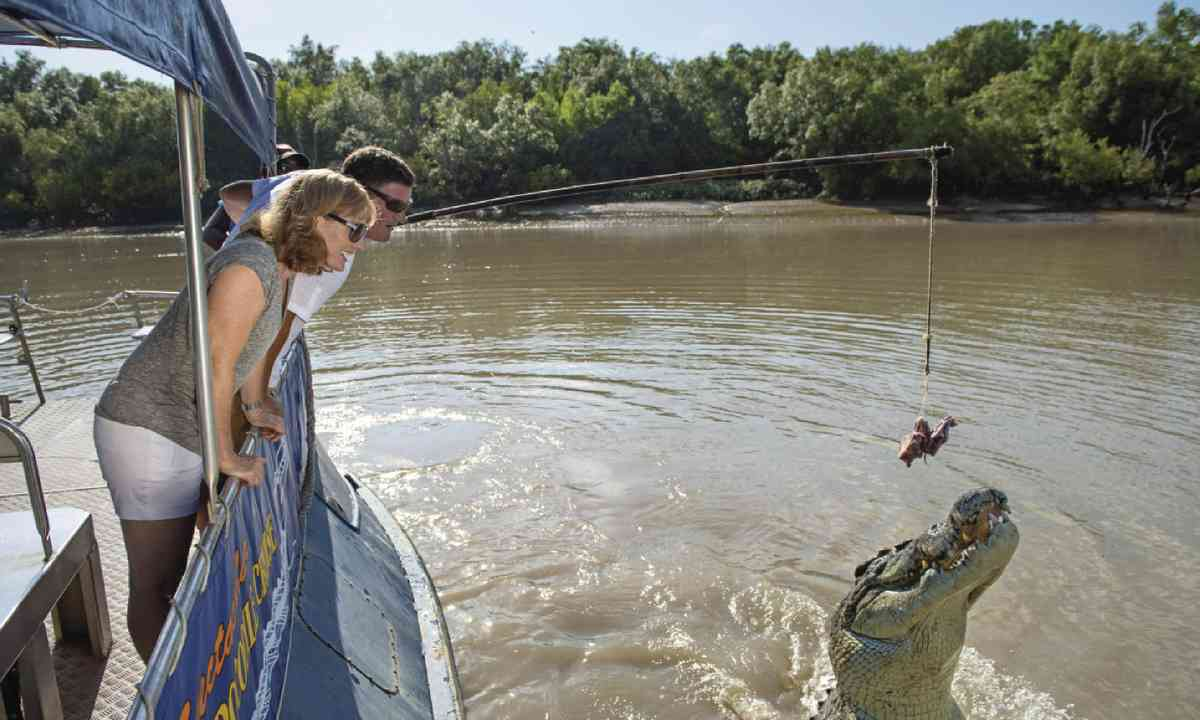 Crocodile Cruise, Adelaide River (Tourism NT)